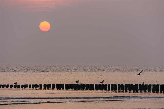 Seagulls perched on pilings in the ocean at sunset