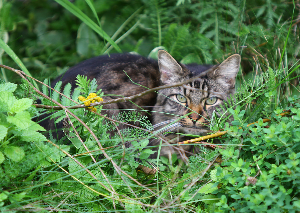 A cat hiding in greenery